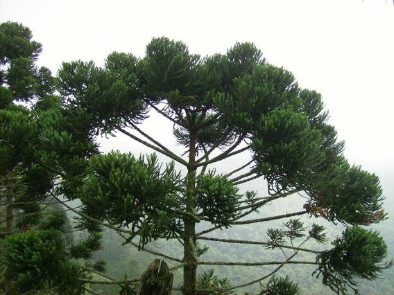 Área Para Compensação De Reserva Legal Bioma Mata Atlântica
