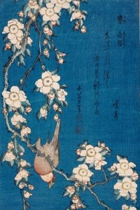 Katsushika Hokusai - Jilguero Y Cerezo - Lámina 45x30 Cm.