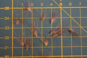 400 Sementes Capim Roxo Do Texas (pennisetum Setaceum)