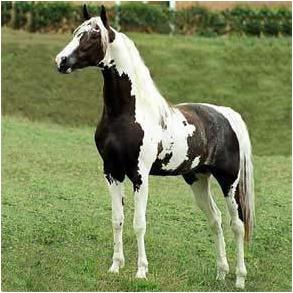 3 Dvd´s Cavalos - Monty Roberts + Redeas + Casqueamento A3