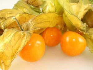 100 Sementes Hosuky-physalis Fruta Rara