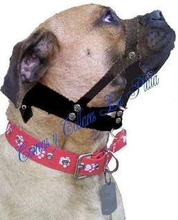 Collar De Entrenamiento Halti (simple)