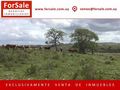 Campo Ganadero / Forestal Muy Cerca De Velázquez