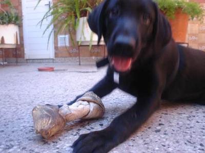 Guarderia Canina, En Capital Federal-villa Urquiza