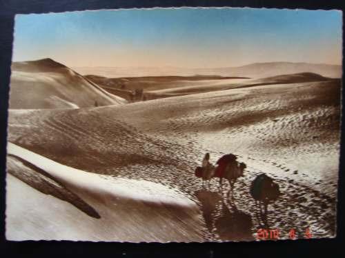 Camellos En El Desierto, Marruecos. Antigua Postal.
