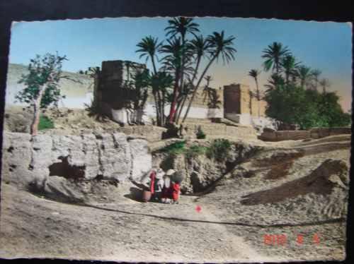 Marruecos. Palmeras - Antigua Postal.