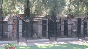 Centro Canino El Faro