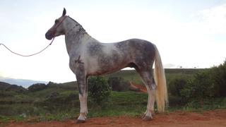Cavalo Geriba Do Mzc Filho Seyko Lj Astra Macaé,coberturas