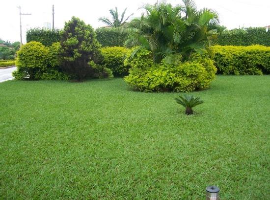 3kg Sementes De Grama Batatais (mato-grosso) Rende 300m².