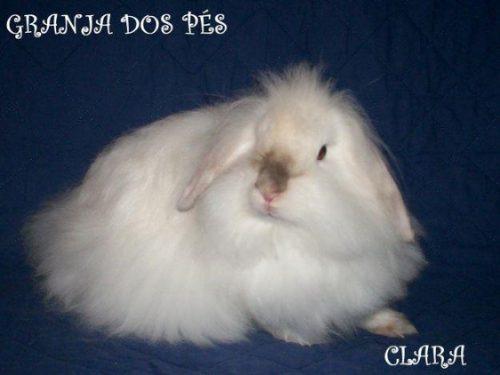 Mini Coelhos - Granja Dos Pés - Fuzzy E Lop!!