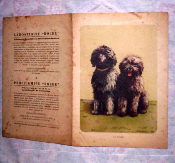 Rara Prancha Antiga Desenho Cães