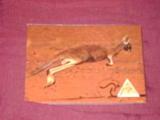 1 Cartão Postais Da Autralia .