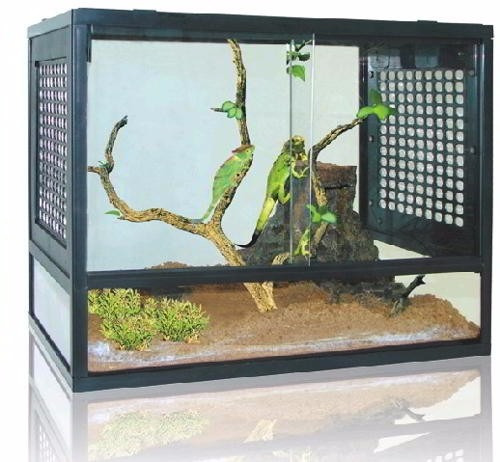 Terrário Para Répteis Iguana¿ E Camaleão