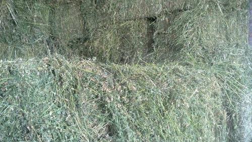 Fardos Rectangulares De Alfalfa