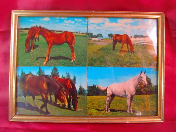 El Arcon Cuadro Con Fotos De Caballos 30,5cmx22cm 6007
