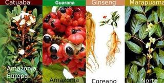 Energético - Ginseng - Catuaba - Marapuama- Guaraná