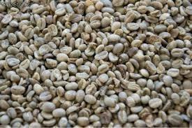 12 Kilos Cafe Verde Para Tostar Tipo Oro Lavado