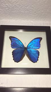 Mariposa Morpho Azul Cuadro Decorativo Didius Peru