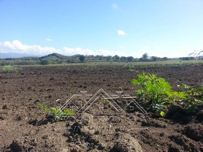 Coalicion Vende 53 Tarea Agrícola En Guayacanes Janico