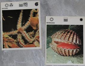 Cards Coleção Mil Bichos Década De 70-diversas Fichas