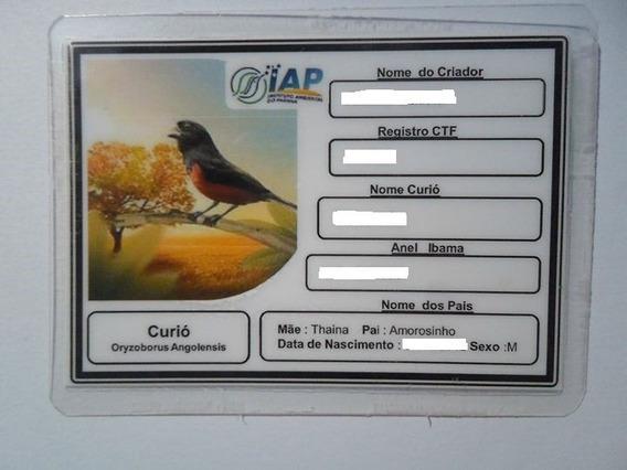 Placa De Indentificação De Passaros