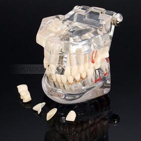 Manequim Modelo Odontológico Dentista E Estudante