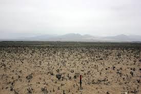 Terreno Punta De Choros