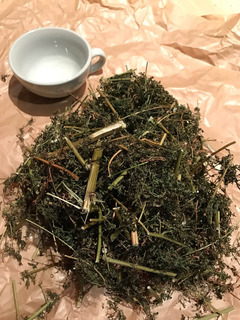 Artemisia Annua. Hierba Seca. 2019