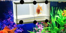 Incubadora Criadeira Isolamento Alevinos Peixes Aquário Xx