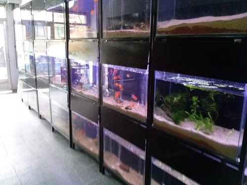 Kit Pecera 100x40x30 Tropical Aquariumba Envios Gratis Ver
