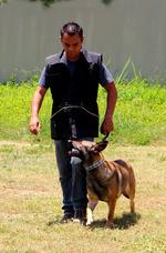 Adiestramiento Para Perros Y Entrenamiento Canino