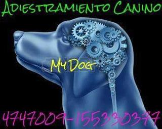 Adiestramiento Canino Personalizado Mar Del Plata