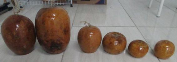Cabaças Para Berimbau (2 Médios E 1 Viola)