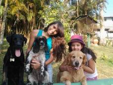 Hotel Y Pensión Para Perros. Guarderia Y Hospedaje Canino