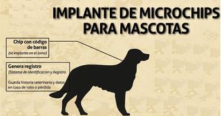 Chip Microchip Identificacion Perros Gatos + Chequeo