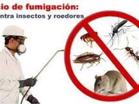 Fumigaciones Proservi Elimino Chiripas Autorizad Min Sanidad