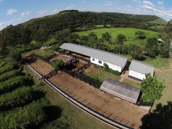 Fazenda De Gado De Corte E Café Com 319 Ha No Sul De Mg