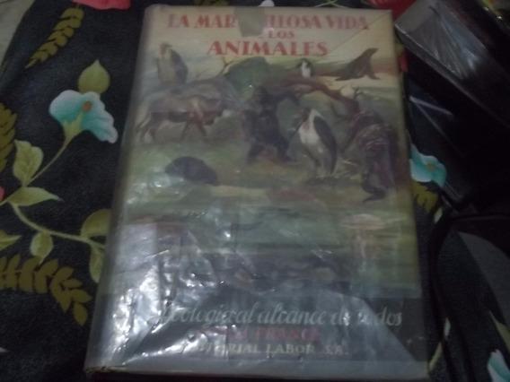 La Maravillosa Vida De Los Animales Autor R H France 1964