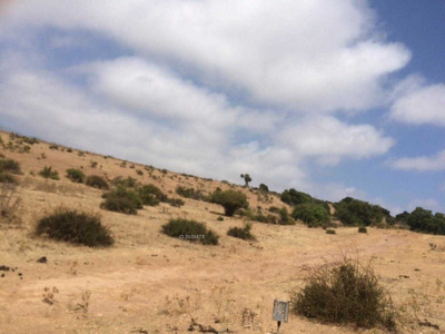 Camino A Quintero , Campo De 300 Hectáreas .