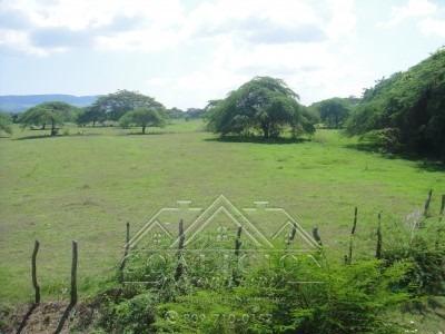 Coalicion Vende 200 Tareas En La Isabela 100 % Agricola
