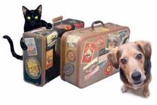 Hotel Para Mascotas - Pensionado Canino Y Felino. 099794974