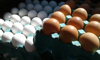 Huevos Colorados Premium!!!!