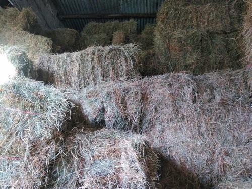 Imagen 1 de 5 de Fardos Alfalfa Mesclas Cuadrados