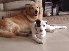 Adiestramiento Canino A Domicilio !!!!