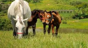 Curso De Manejo Nutricional De Equinos