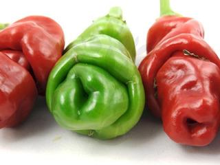 Sementes De Pimenta Penis - Peter Pepper Chili Capsicum