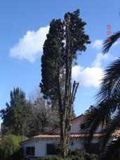 Podas En Altura Extracciones,de Arboles 1166338665