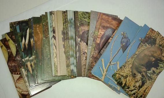 Figurinhas Surpresa Animais Do Pantanal Preço Por 5 Unidades