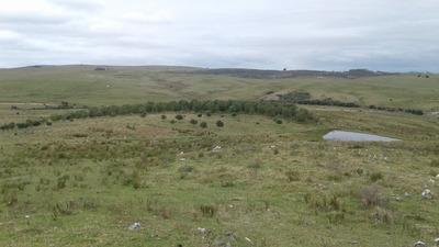 Venta De Chacra Con Olivos En Sierras De Lavalleja