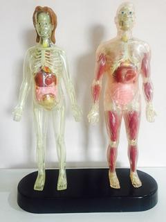 Corpo Humano - Esqueleto E Orgaos - Coleçao Salvat